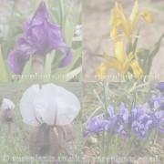 Iris archive