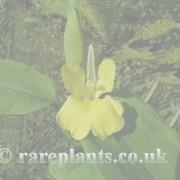 Pyrgophyllum archive